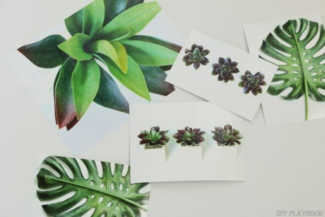 Gallery Wall Prints for Free | Large Succulent Plant, Three Succulent Planters, Large Palm Leaf