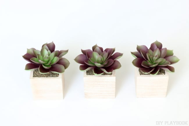 Three Small Succulent Planters | Free Gallery Wall Print from DIY Playbook