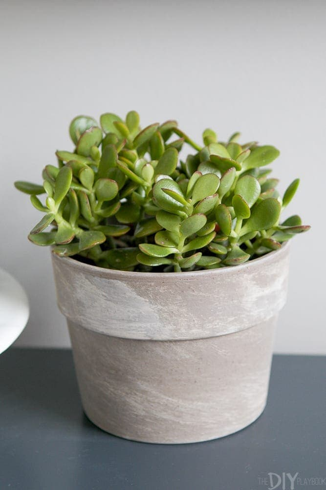 A small succulent plant adds color to the neutral room.