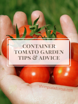 Container Tomato Gardening – How To-sday thumbnail