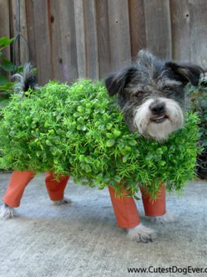 7 DIY Pet Halloween Costumes thumbnail