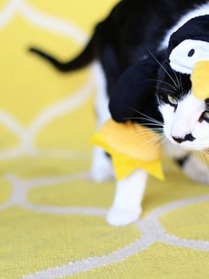 Rosco Dressed as a Penguin (Oh, and a Halloween Photo Contest!) thumbnail