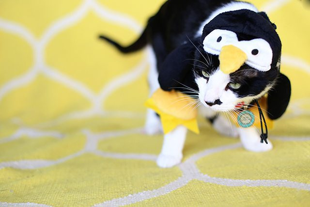 Penguin Cat Halloween Costume - Hairy & Scary Contest