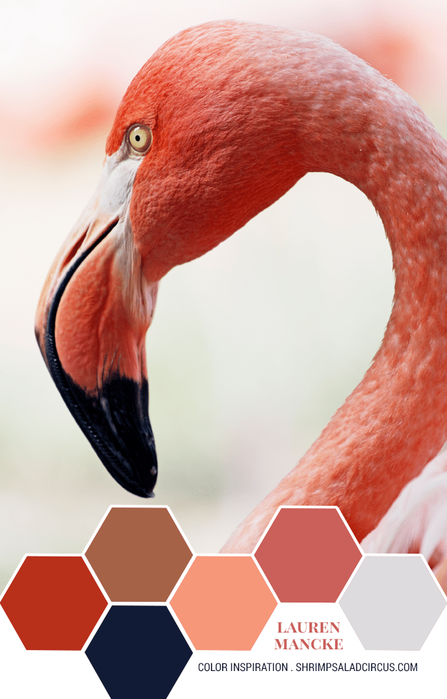 Color Inspiration - Pink Flamingo Color Palette