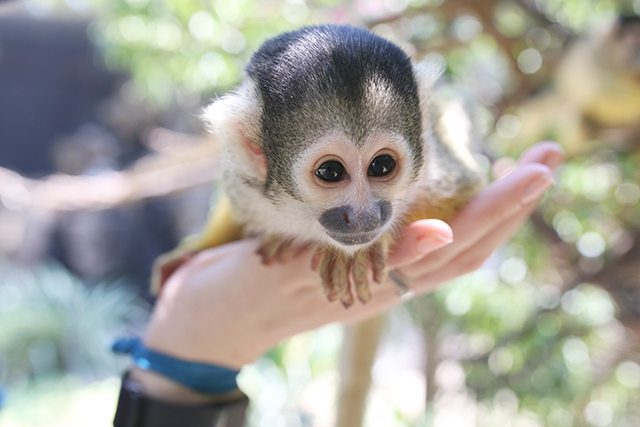 Cape Town Travel Guide - What to See - Squirrel Monkeys at World of Birds Wildlife Sanctuary
