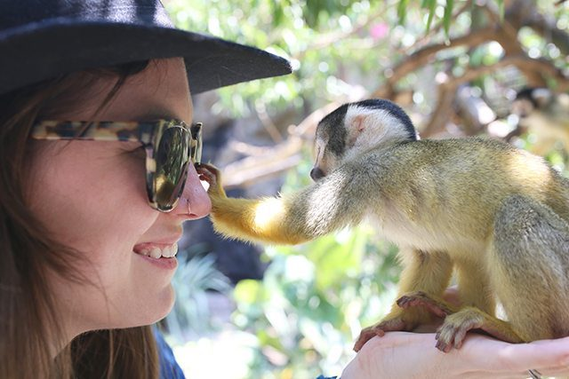 Cape Town Travel Guide - What to See - Squirrel Monkeys in the Monkey Jungle at World of Birds Wildlife Sanctuary