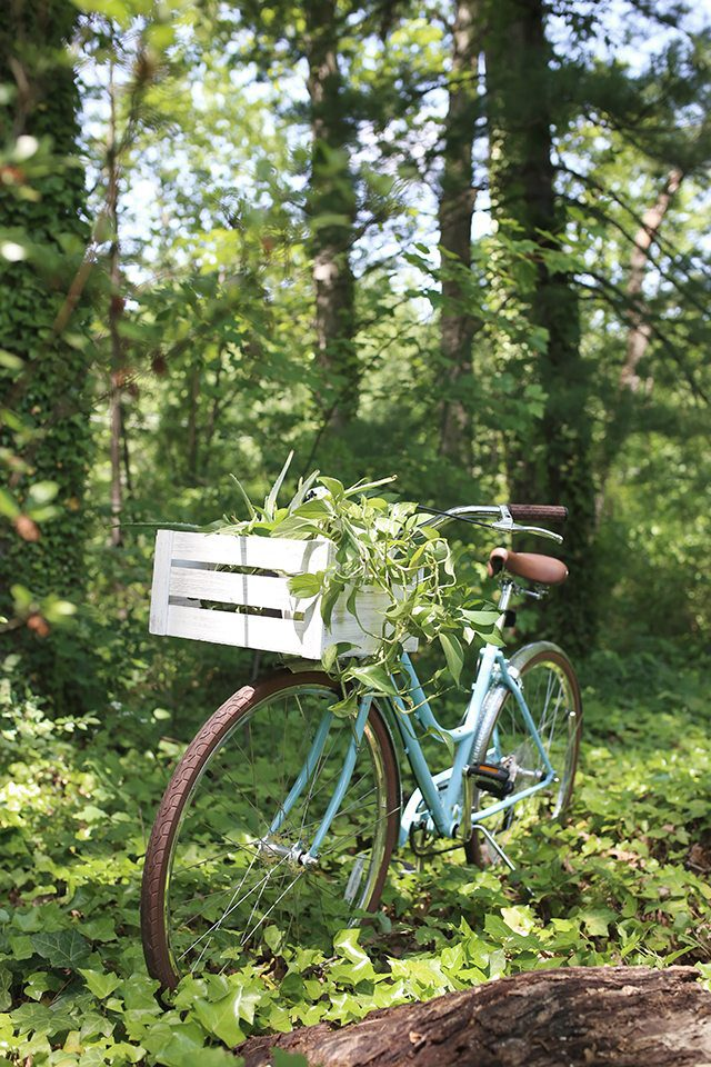 Tips for Choosing the Right Bike Basket - White Wooden Crate