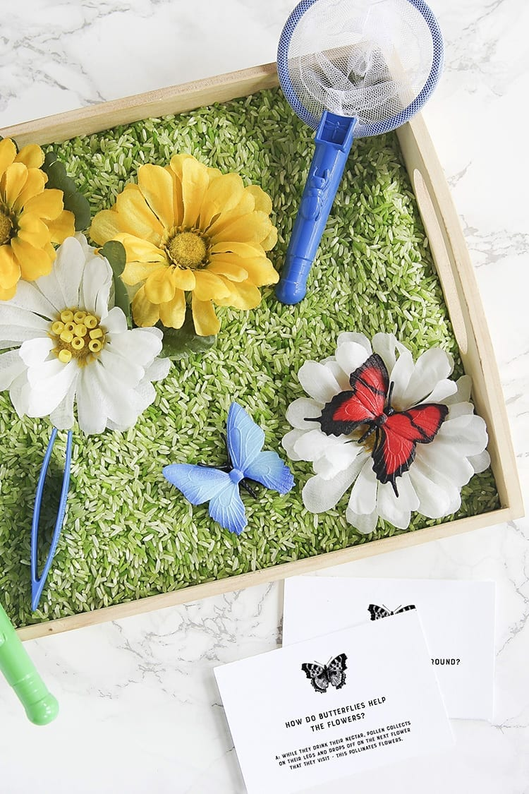 Butterfly Sensory Activity for Preschoolers - Tray of green rice with toy butterflies